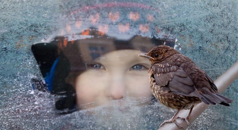 Bird Window 01